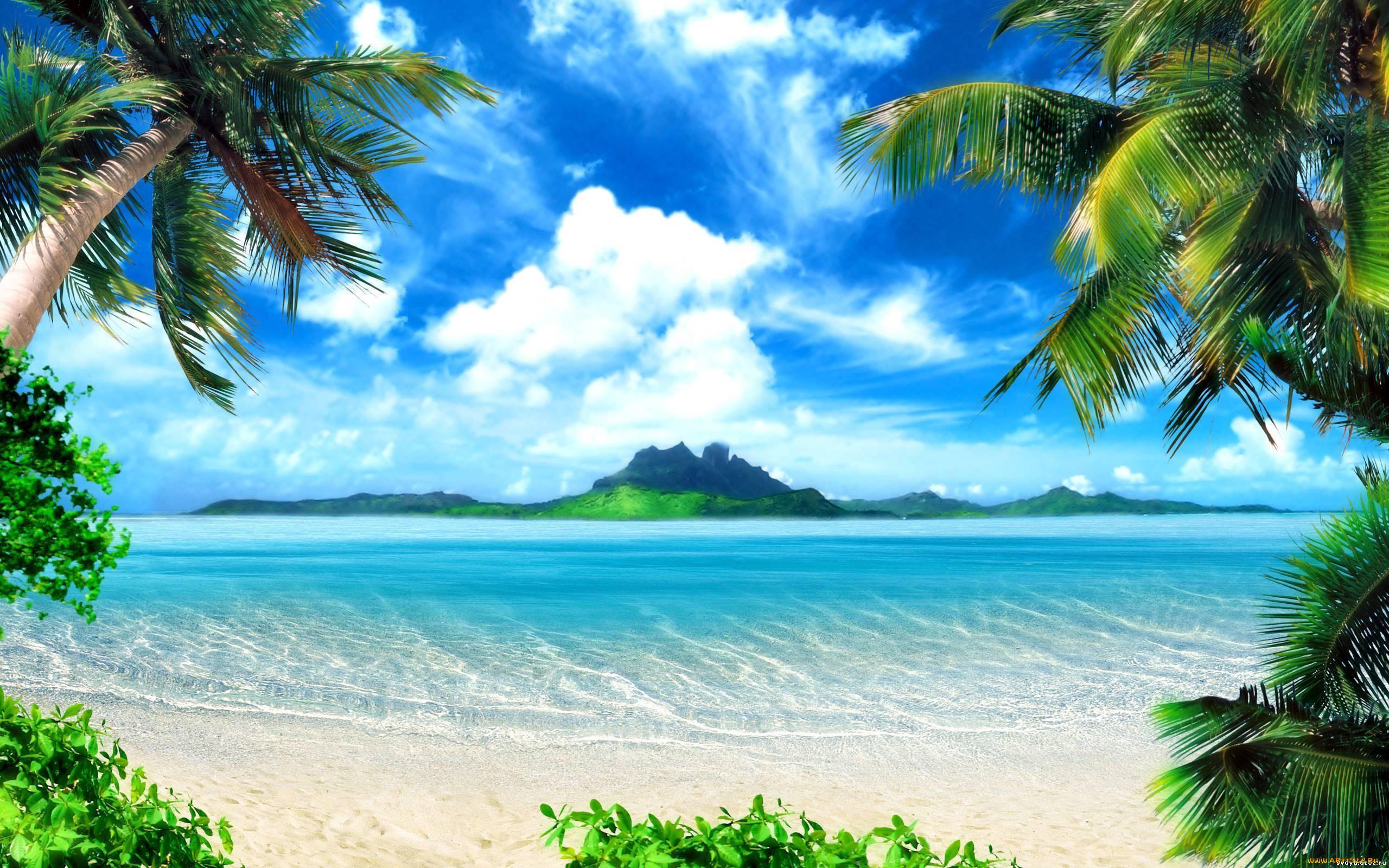 Природа тропики пальмы море пляж